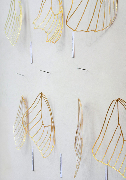 Maria Hubinger, Interrelated 1, Stencil film, gold foil, nails, nylon thread and labels with names of the butterflies, Thessaloniki